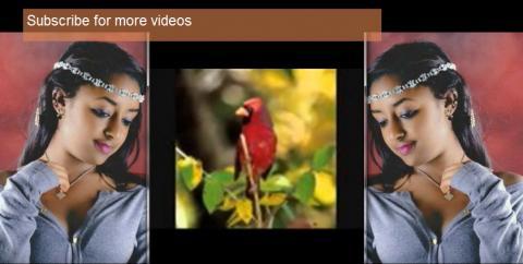instrumental music - (Ethiopian music)